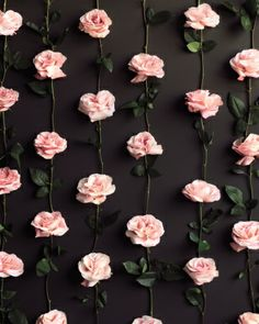 Roses pinned to a Wall! Fun photobooth backdrop idea