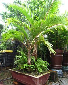 Những loại cây cảnh nên trồng trong nhà