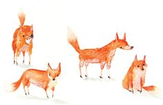 Lucy Eldridge: Foxes