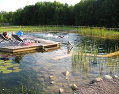 swimming ponds