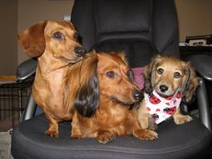 Don't forget to enter our #BestBuds Photo Contest by Sept. 22nd or these doxies won't appear in your dreams!