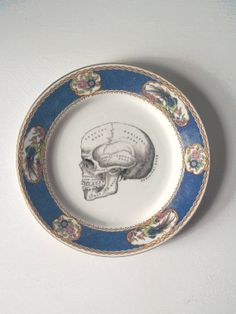 Vintage Anatomical Skull Plate Altered Art