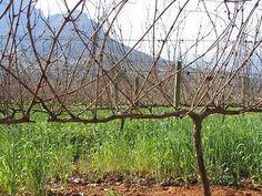 How to Propagate Grape Vines thumbnail