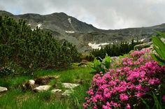 Retezat Mountain Visit Romania, Mountains, Country, Nature, Travel, Naturaleza, Viajes, Rural Area, Destinations