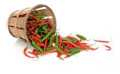 Sådan dyrker du chili.