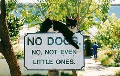 This cat means business.