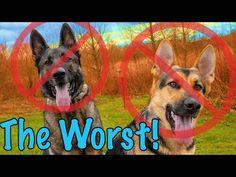 12 Reasons Not to Get a German Shepherd! German Shepherd Puppies, German Shepherds, Dog Breeds, How To Get, Dogs, Youtube, Campaign, Watch, Medium