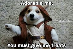 Visit our page on facebook for more memes and videos https://facebook.com/PetFaze