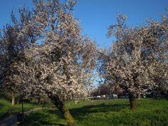 Primavera 2016 / Giardini via Rogoredo