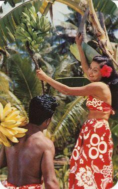 Harvesting bananas in Hawaii. Vintage postcard.