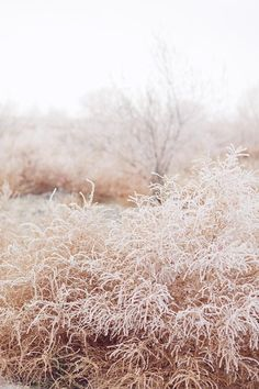 Frost. Ciara Richardson Photography #landscape #soothing #beige #pale #pink #nude
