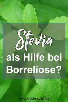 Stevia oder auch Süßblatt ist eine Pflanze, die vor allem als Zucker Ersatz bekannt ist. Man findet sie in zahnfreundlichen Kaugummies, Getränken oder auch als Pulver, um zum Beispiel damit zu backen. Stevia ist jedoch auch in der Naturheilkunde relevant. Es gibt mittlerweile einige Studien, die die Wirksamkeit von Stevia untersucht haben unter anderem wurde der Einsatz bei Borreliose erforscht.