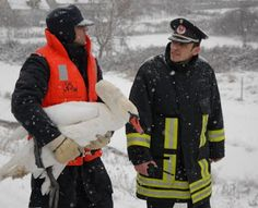 Swan stuck in ice, rescued by firefighters
