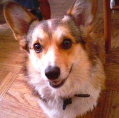 Riley dog  :)