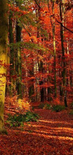 Magnificent Autumn Beauty