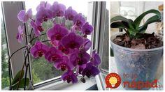 Tip od Janky, ako prebrať orchideu.