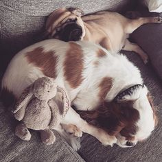 love sleeping with my best friend 🐶🐾🐶 My Best Friend, Best Friends, I Love Sleep, Cavalier King Charles, Little Dogs, Dog Life, Hulk, Boston Terrier, French Bulldog