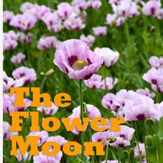 Moon in Libra Cardinal Air sign, Libra is ruled by goddess of beauty, Venus. If you're looking for beautiful flowers and an abundance of bees, plant your seed when the moon is in Libra. Image: Michelle Montgomery