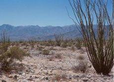 A List of Drought Tolerant Plants