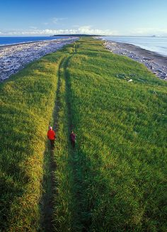 A grassy stretch of land between islands at Rose Spit, Haida Gwaii (Photograph by David Nunuk, Alamy)