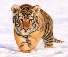 Tiger Cub In Snow Painting Print by David Stribbling
