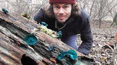 Kunterbunter Dezember - Bunte Pilze Und Frische Wildkräuter Sammeln Im D...