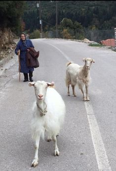 Thing you see in Crete, Greece Greece People, Animals And Pets, Cute Animals, Zorba The Greek, Myconos, Western Philosophy, Crete Island, Greek Culture, Minoan