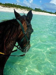 Anyone for a horseback ride?  Turks & Caicos ......where do I sign up?