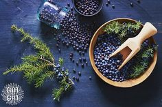 Using juniper berry oil is a wonderful way cleanse yourself of negative energy. Juniper Berry Oil, How To Treat Dandruff, Cypress Oil, How To Relieve Headaches, Lemon Oil, Best Oils, Orange Oil, Carrier Oils, Medicinal Herbs