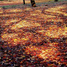 #autumn #autumncolors #autumnleaves #nature #紅葉