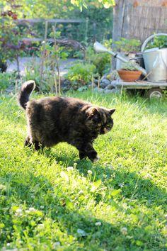Cats, Animals, Gatos, Animales, Animaux, Animal, Cat, Animais, Kitty