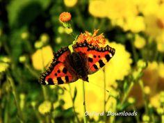 Butterfly Print Tortoise Shell Digital Download by OxfordDownloads