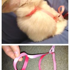 Made a custom collar and leash for my bunny