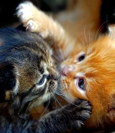 kitten kiss!