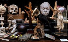 Conchology, taxidermy, specimens, coral