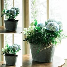 Spring Container Gardens: Back to the Basics with the Three T's by Carmen Johnston Gardens