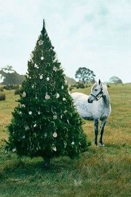 just what I always wanted and never got, a pony under the christmas tree!