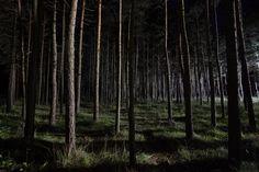 Výsledek obrázku pro deep dark forest