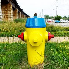 #FireFriday? Fancy #Firehydrant Friday this #FlowerFriday only @PortHope #Ontario #Canada! Hoping for no #fires :) #yellow #red #blue #colors of #firehydrants #fancy #firemen #firewomen #firefighters #firepeople of Instagram and #twitter #symmetry #flowers #instaphoto #PortHope #oldbridge #greengrass #TGIF and #Free of #Fire