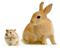 big and small animals - Google Search