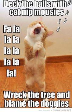 Meet Nutmeg The Cat, the old cat: The oldest living cat in the World Fun Claw – Lustige Katzen, lustige Hunde, lustige Tiere: Lustige Bilder von Katzen – 17 Bilder Funny Animal Jokes, Funny Cat Memes, Cute Funny Animals, Cute Baby Animals, Funny Cute, Funny Dogs, Cute Cats, Funny Humor, Funny Happy