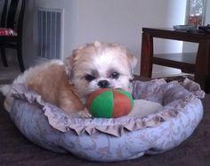 Makai, 2013. Loves his toy ball!
