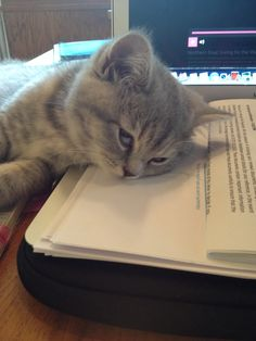 It's my turn on the mac...... #kitten #britishshorthair #queenelsa #cat