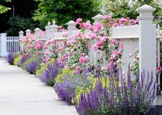 Flowers in front and through a white picket fence. Garden Spaces - traditional - landscape - other metro - dabah landscape designs. Chicago Landscape, Fence Landscaping, Landscaping Software, Landscaping Contractors, Luxury Landscaping, Landscaping Company, California Front Yard Landscaping Ideas, Landscaping Around Patio, Landscaping With Roses