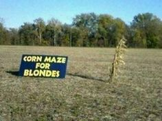 Image detail for -Corn Maze For Blondes | Ton of Funny Stuff Blog