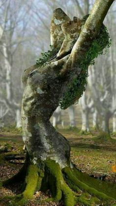 """)O( #Tree_Goddess )O( """"The Divine does not like to be shut up in a building. The Divine likes to be out in the open. It is right here in this very body. Each one of us is a miniature universe, a living shrine."""" —#Morihei_Ueshiba ..*"""