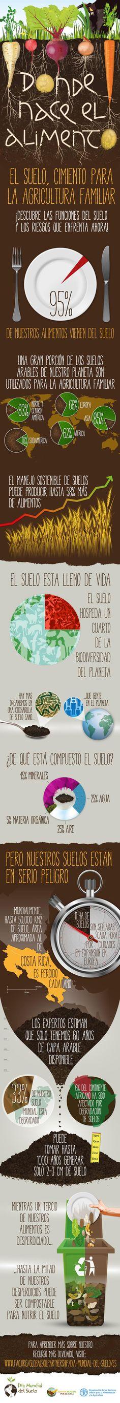 Día Internacional de la Conservación del Suelo, el sustento de la vida