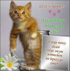 Cats, Animals, Quotes, Gatos, Animales, Animaux, Animal, Cat, Animais