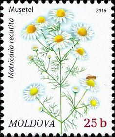 Moldova+Postage+Stamps+(Definitive)+2016+№+952+|+Chamomile+(Matricaria+Recutita)+|+Issue:+Flora:+Wild+Flowers