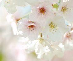Spring Blooms..